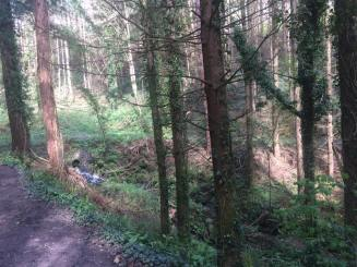Picture 14 - Woodland