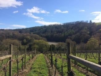 Picture 23 - Sharpham Vineyard
