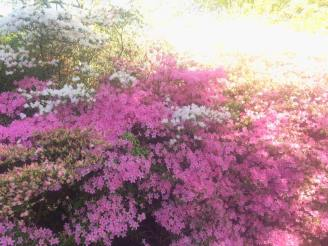 Picture 9 - Greenway blossom