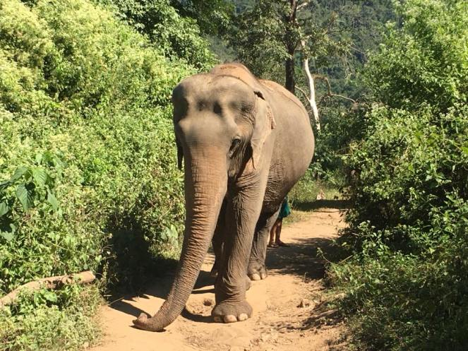 ENP elephant walking
