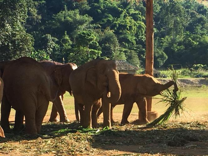 ENP elephants playing