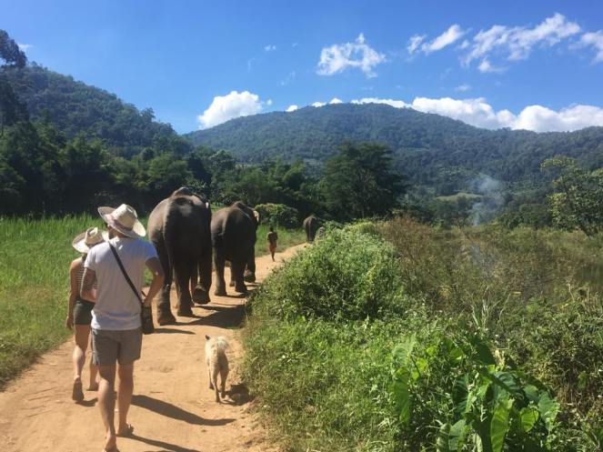 ENP walking with elephants